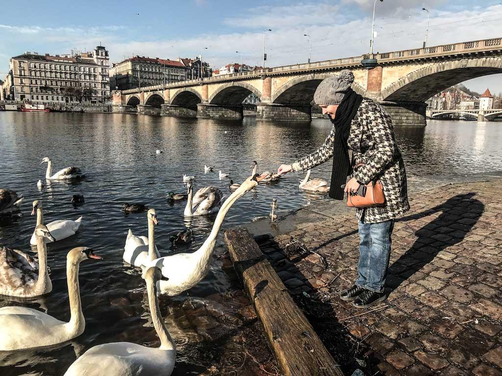 Настя, хлеб и лебедь