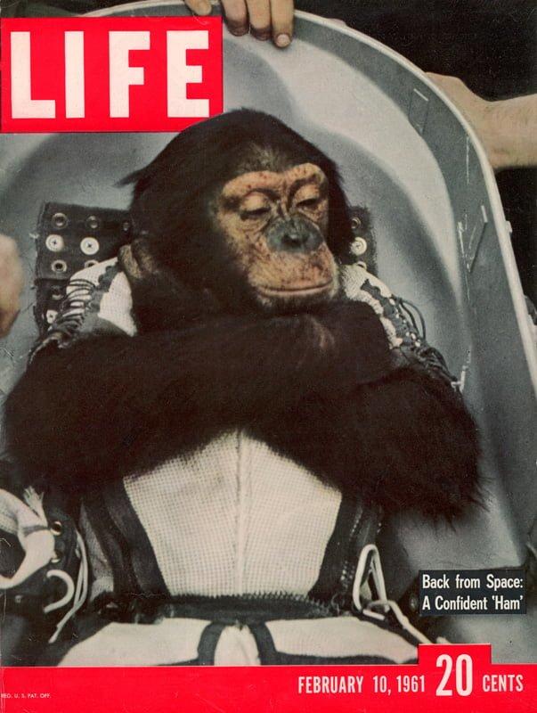 İlk Uzay Şempanzesi: Ham