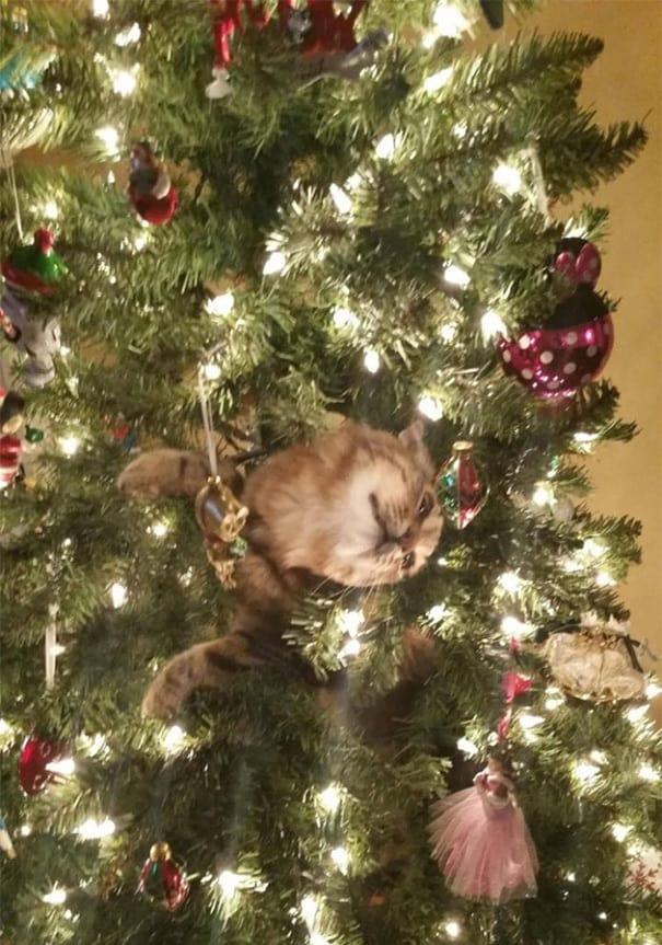 19 пушистых мерзавцев, которые объявили войну новогодним ёлкам, и только котовладельцам совершенно не до смеха