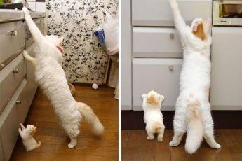Кошки со своими точными копиями – природа умеет удивлять