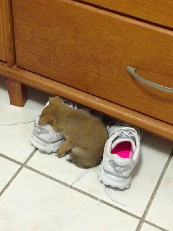 15 фотографий животных, которые спят там, где захотят