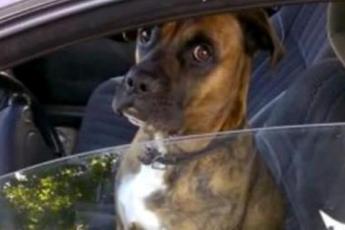 Парни решили подшутить над собакой, которая сидела одна в машине!