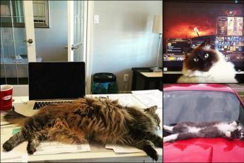 Лежу где хочу: 15 котов, которые любят валяться в самом неподходящем месте