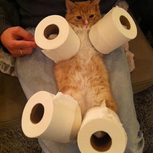 16 фото, после просмотра которых, вы еще больше полюбите котов
