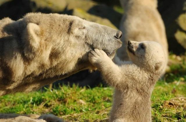 15 чудесных семейных фотографий из животного мира