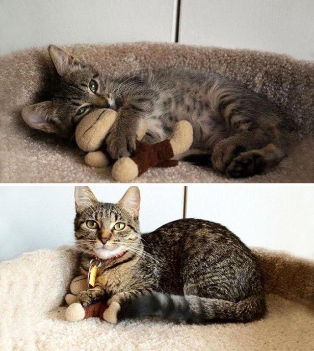 15+ фото животных, которые росли вместе со своими игрушками