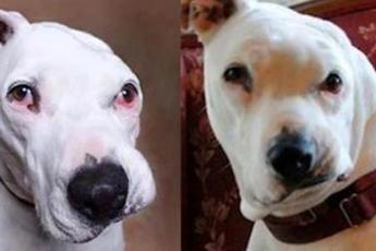Собака, над которой издевались, сорвалась с поводка и бросилась на 12-летнего мальчика — всё, что ей было нужно, это доброта