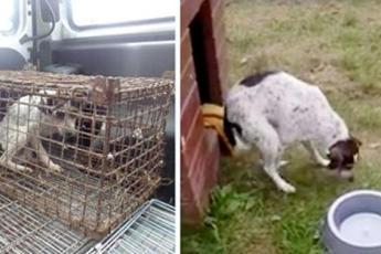 Собака провела всю жизнь в клетке – посмотрите, как она счастлива, когда наконец обрела свободу