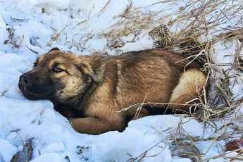 Водитель сбил собаку на дороге и оставил умирать в снегу. Помощь пришла через 12 часов