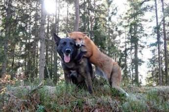 Каждый день собака убегает в лес. Когда хозяин собаки узнал, с кем она там встречается, он был потрясен!