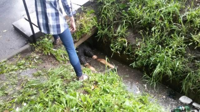 Её щенков затопило дождём, и она изо всех сил звала на помощь! Трое спасателей не пожалели ни своей одежды, ни душевного тепла…