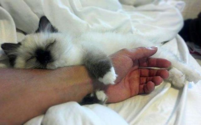 Если кошка любит спать в вашей постели, что это значит?