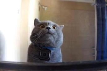 Он повесил камеру своему коту на шею, чтобы узнать что он делает дома один, увиденное поразило Хозяина!