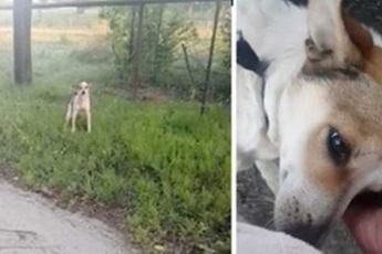 Пес, которого бросили на верную смерть в парке, без устали целует свою спасительницу