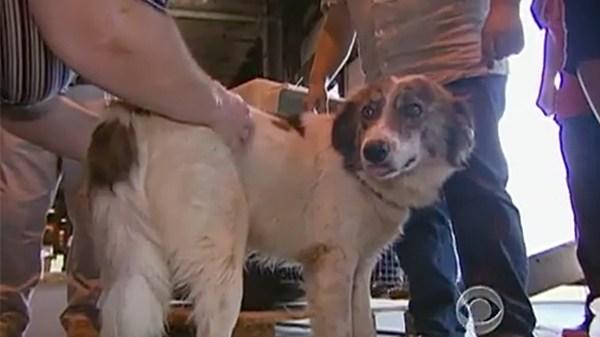 Бездомные собаки спасли солдата в Афганистане, а спустя 4 месяца они снова встретились на другом конце земного шара