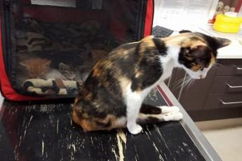 После нападения человека кошка, которую парализовало, смогла приползти к своим котятам