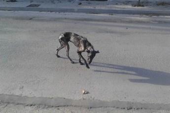 Кажется, спасти истощенного пса было не под силу даже Всевышнему. Прошло 4 недели, и всё изменилось!