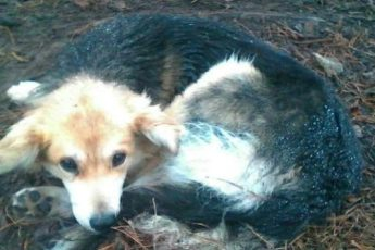 Раненная бездомная собака 5 дней ждала помощи на обочине