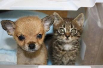 Приютские щенок и котенок спасли друг другу жизнь