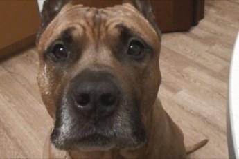 Девушка попросила парня избавиться от собаки и ему пришлось принять тяжелое решение…