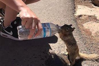ВИДЕО: Измучeнная жаждой белочка попросила у людей попить
