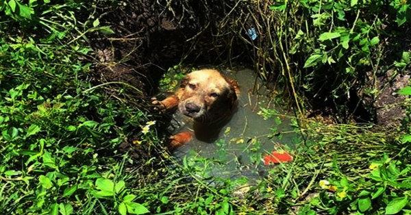 Щенок пропадал в болоте, но остался жив из-за собиравшейся грозы