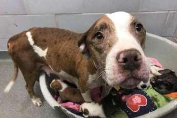 Эту собаку выгнали из дома сразу после рождения щенков