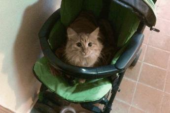 Сидящая на мокрых ступеньках кошка, плакала горькими слезами. Женщина увидевшая это, отдала ей коляску своего ребенка