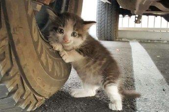 Парень нашел испуганного котенка под грузовиком и просто не смог сказать «нет»