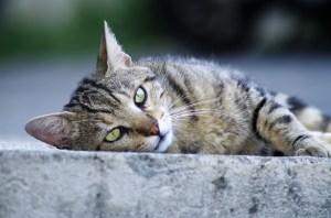 История о том, как кот вернулся к своей хозяйке