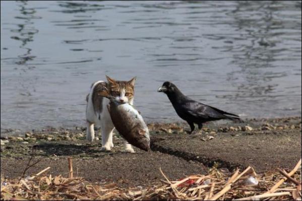 """""""Ворона и кот"""" сказка взрослым"""