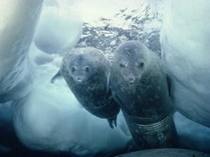 10 невероятных открытий о самом холодном месте на земле