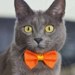 Почему заводить кота — это ужасная идея