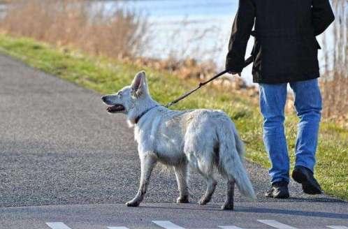 5 вещей, которые собаки чувствуют раньше человека