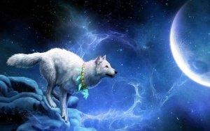 Сравнение зодиакальных знаков с хищными животными: версия для женщин