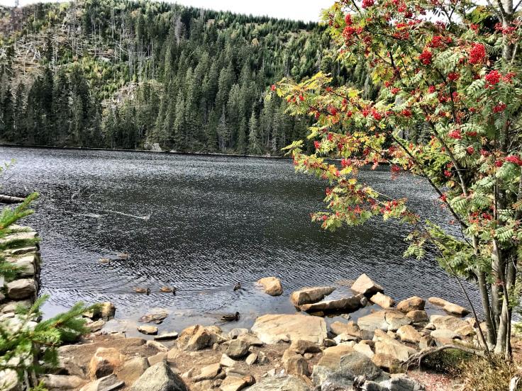 prášilské jezero.jpg