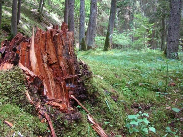 Pejzazh Borzhomskih lesov