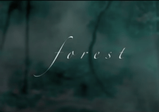 rsitei.forest