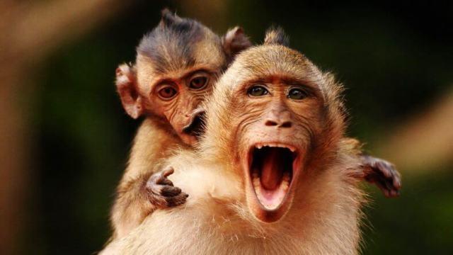 Что делать, если укусила обезьяна