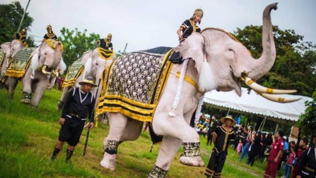 Белые слоны в Тайланде