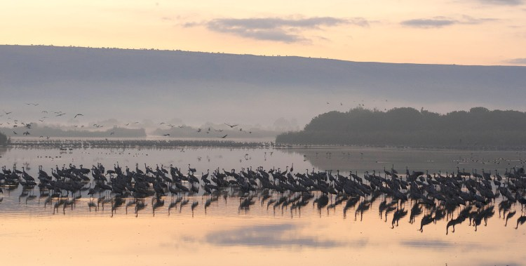 hula valley