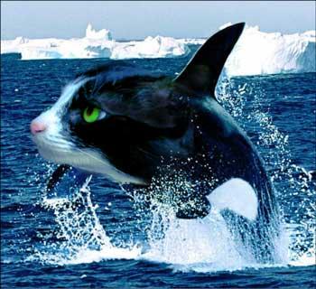 Killer Whale Hd Wallpaper صور حيوانات غريبه بالفوتوشوب منتديات عبير