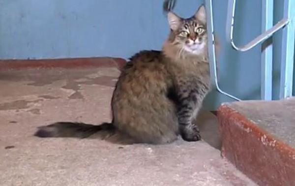 Вот эта кошка отогрела малыша и позвала людей на помощь