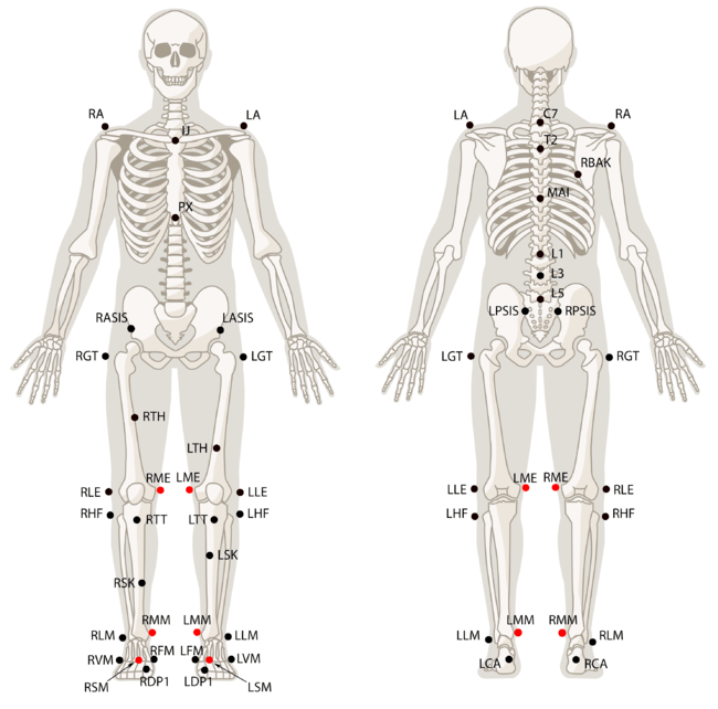 Body Of Sternum Diagram Rizzoli Markerset Naturalpoint Product Documentation Ver