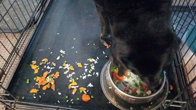 Simba's messy eating