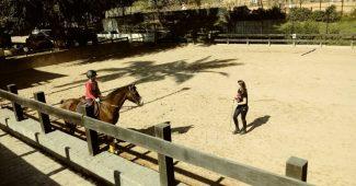 Aula de hipismo equitação montaria, aula em SP