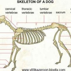 Rat Digestive System Diagram Quiz Gigabit Poe Wiring Index Of /image