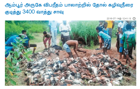 ambur leather ducks killed