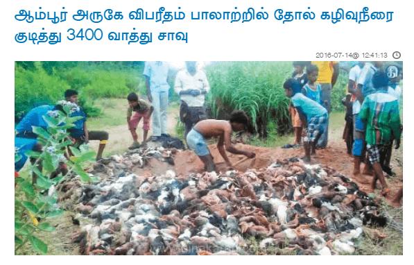 ambur leather ducks killed