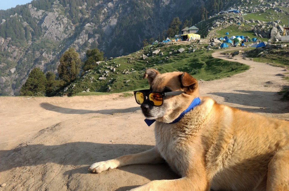 Travel Why Your Dog Needs to be with you in the Next Trip